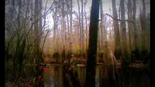 Francis Marion National Forest/Swamp Fox