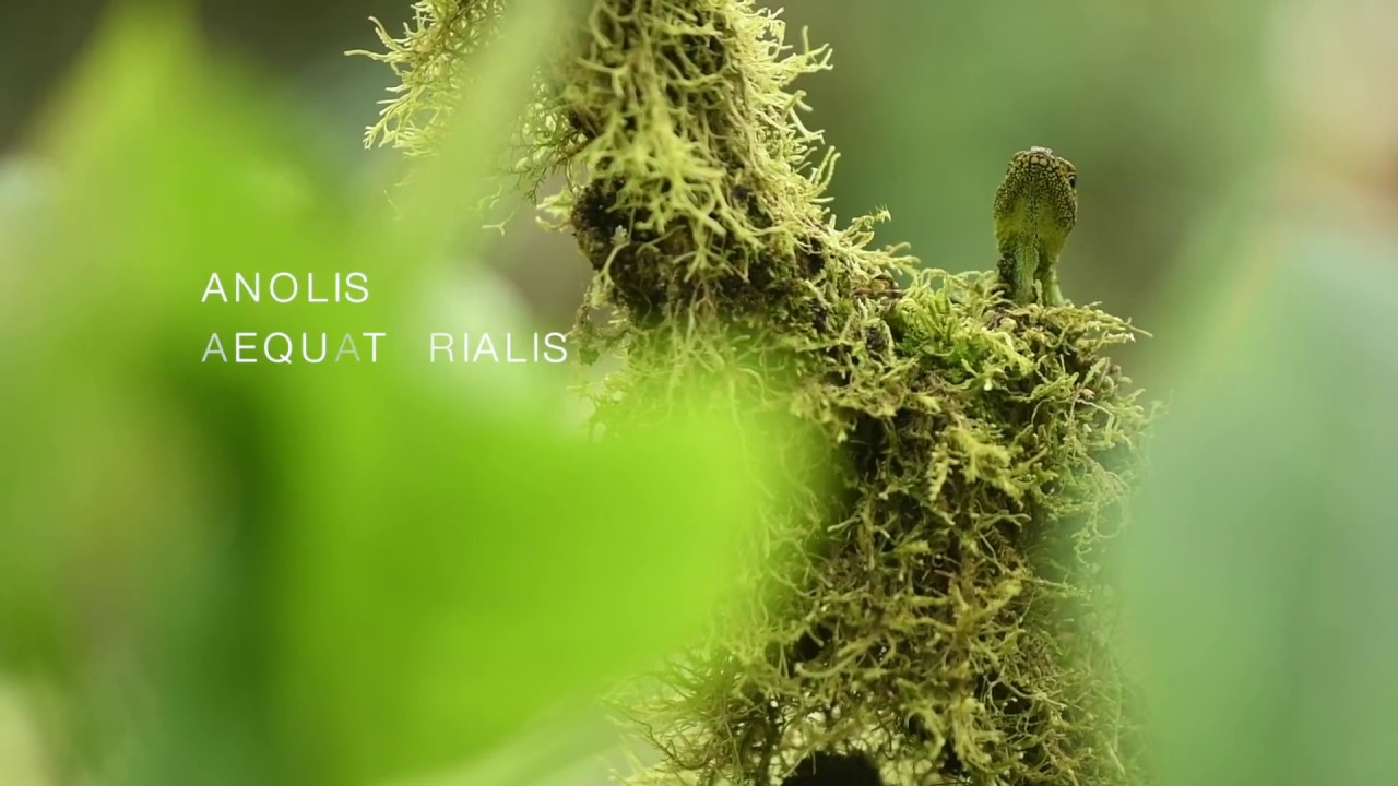Documental Naturaleza