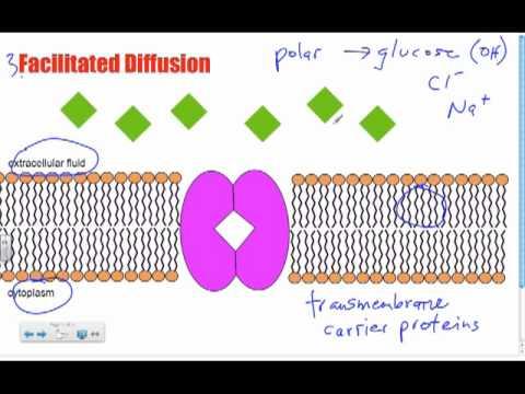 Bio B10 - Facilitated Diffusion: Passive Transport