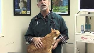 Underwood Vet: Weight Loss For Pets