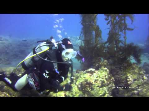 Asante Dives and Anacapa Dives