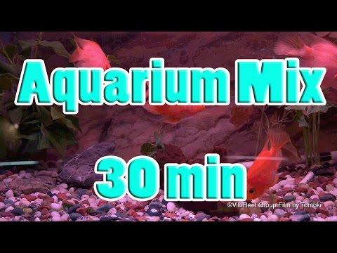 【Virtual Aquarium 4K #11】Aquarium Mix 30 min/River Sound