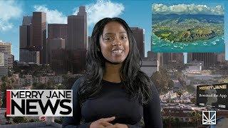 NYC Bans CBD Drinks & Edibles | HI & NM Move Towards Legalization | MJ NEWS