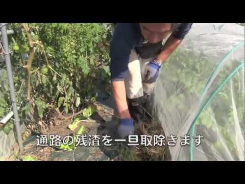 ファミリー農園121020生ゴミ堆肥・収穫