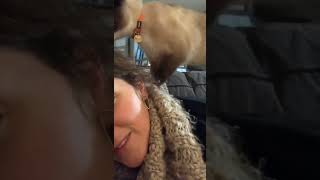 Cat massage goes wrong