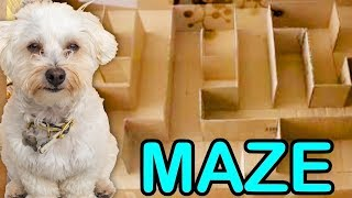 GIANT MAZE FOR PUPPY!! CAN SHE FIND THE EXIT??🤔