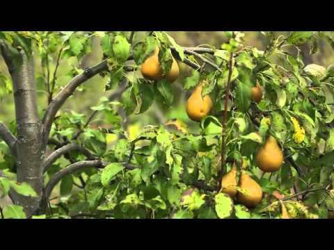 Le Verger Permaculturel : Au-delà du bio