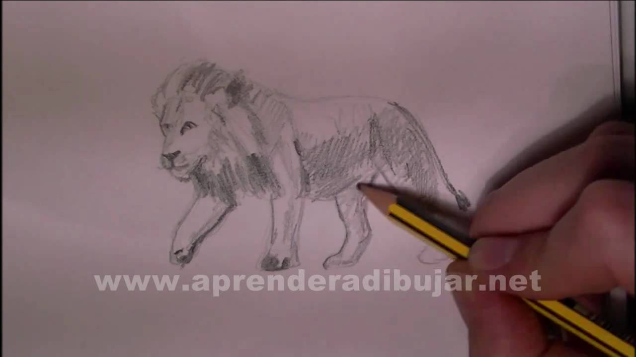 Dibujos de leones - Cómo dibujar un león a lápiz - YouTube