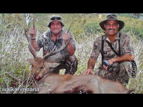 Hunting Rusa deer in New Caledonia part 16