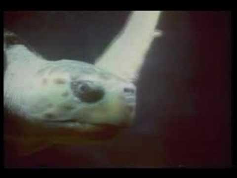 Ocean World: Turtle
