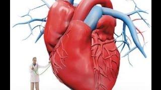 как сердце качает кровь