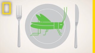 Should We Eat More Bugs? | National Geographic
