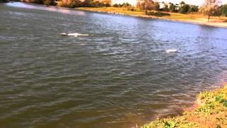 Smash sharks rc boats in rough water whit flip