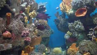 sini-korallia