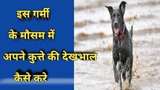 How To Care Dog In Summer Weather//इस गर्मी के मौसम में अपने कुत्ते की देखभाल कैसे करें //
