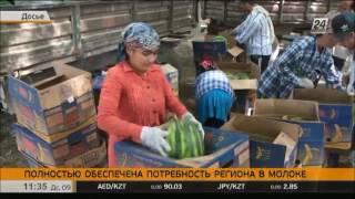 Южно-Казахстанская область обеспечила потребность региона в молоке