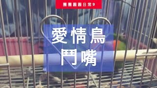 愛情鳥鬥嘴 | 團團圓圓生活日常#9