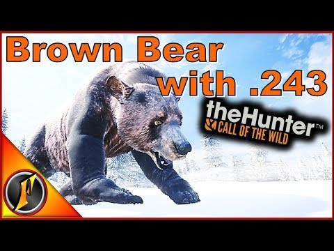 Brown Bear with .243 | theHunter: Call of the Wild 2017