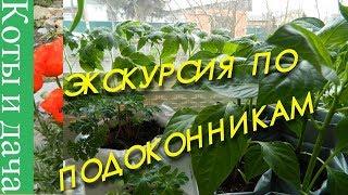 ЭКСКУРСИЯ ПО ПОДОКОННИКАМ Мои комнатные цветы и растения Цветы на подоконнике 3