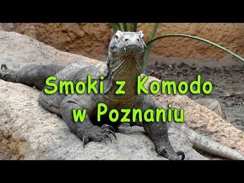Smoki Z Komodo W Poznaniu - Smakkujaw.pl