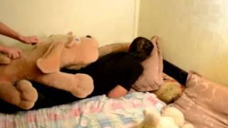 Плюшевая собака трахает парня