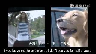 """'One Minute More' Trailer w/ English Subs -《我的男友和狗》""""十年一生""""金毛里拉預告片 英文字幕版"""