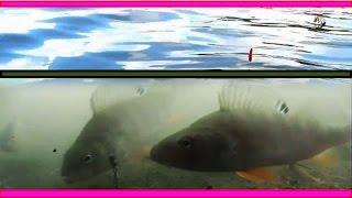 ПОКЛЕВКИ на удочку с боковым кивком и поплавочную удочку. Синхронная съемка над и под водой. Рыбалка(ПОКЛЕВКИ на удочку с боковым кивком и поплавочную удочку. Синхронная съемка над и под водой. Рыбалка….((Мой..., 2016-05-23T10:43:58.000Z)