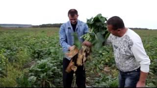 21 11 2011 ЦБ с  Agroprofi после градобоя в мае