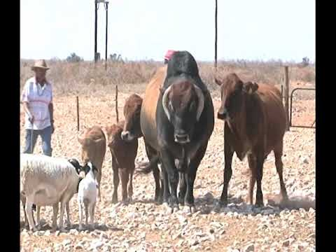 Aroab Small Farmers Association wants ACC to investigate //Karas Resettlement Committee - NBC