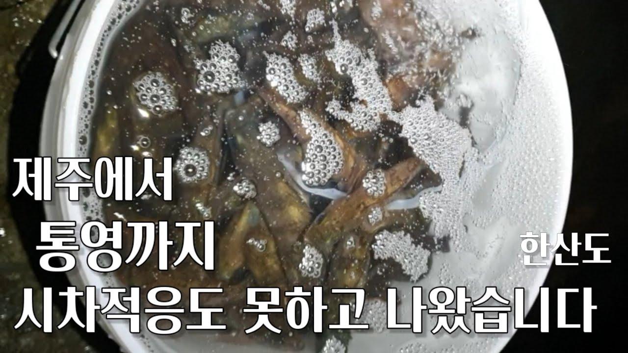 제주에서 통영 오자마자 뽈라구 (feat 고봉 by 한산도)