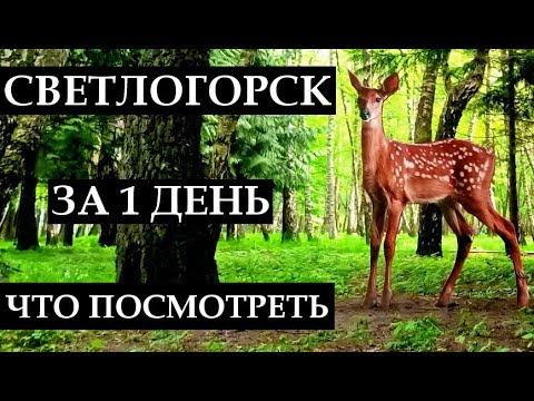 СВЕТЛОГОРСК ЗА 1 ДЕНЬ: что посмотреть, достопримечательности, отдых в Калининградской области 2019