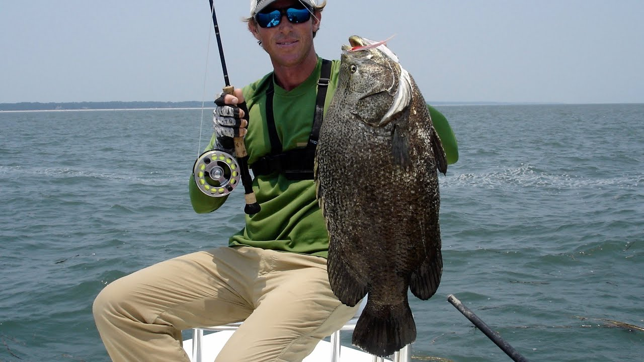 World record tripletail off the hook charters hilton for Right hook fishing charters