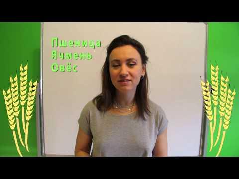 Яровые культуры в России — что такое яровые зерновые, посевная площадь яровых