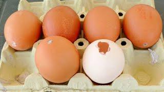 Cómo hacer un huevo falso para el gallinero