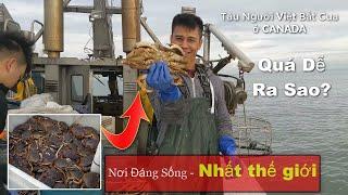 Catch Canadian Crabs - p2