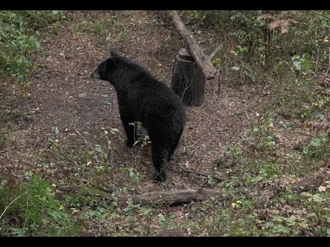 DIY Wisconsin Bear Hunt