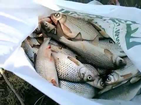 в какое время года лучше ехать на рыбалку в астрахань