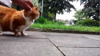 Fat, Obese Cat (Female Garfield), St Simon Street, Salford, Greater Manchester