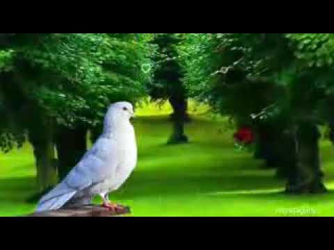 New song #Aakhri Saans Tak Is Dil Mein Tera Pyar rahega#n