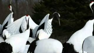 BIRDS (Armando Sciascia - Largo)