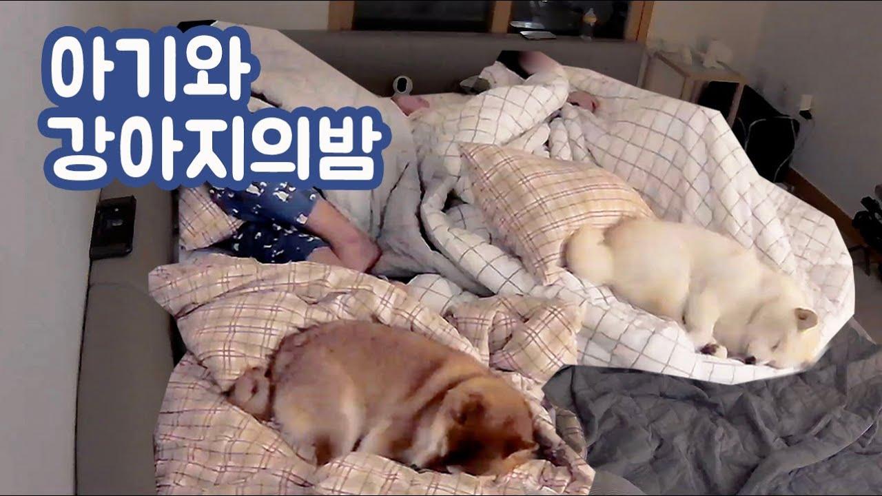 강아지와 아기 키우는 집사들의 밤