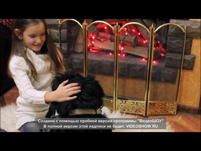 Изображение предпросмотра прочтения – МиланаВасилевская читает произведение «Собака» И.С.Тургенева
