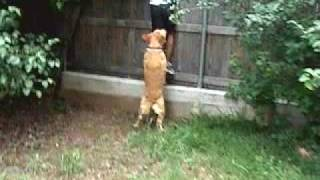Asian kid humped by dog- Part 2