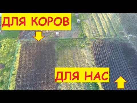 Деревенские будни / Весь день в огороде / Для коров посадили всё!