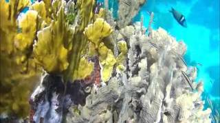 Our Magical Island, Snorkeling Roatan