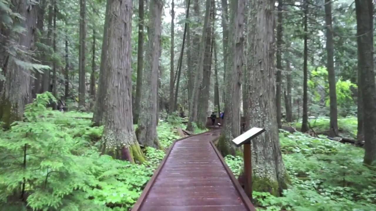 Cedar Trail Glacier National Park Youtube