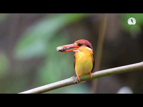 Colorful Kingfisher (Hindi) - रंगबिरंगा किंगफिशर