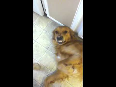 Dog doesn't want to go to bed .. - YouTube