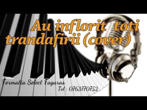 Formatia Select - Au inflorit toti trandafirii (cover)