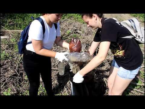 За вами убирают дети  Река Кубань
